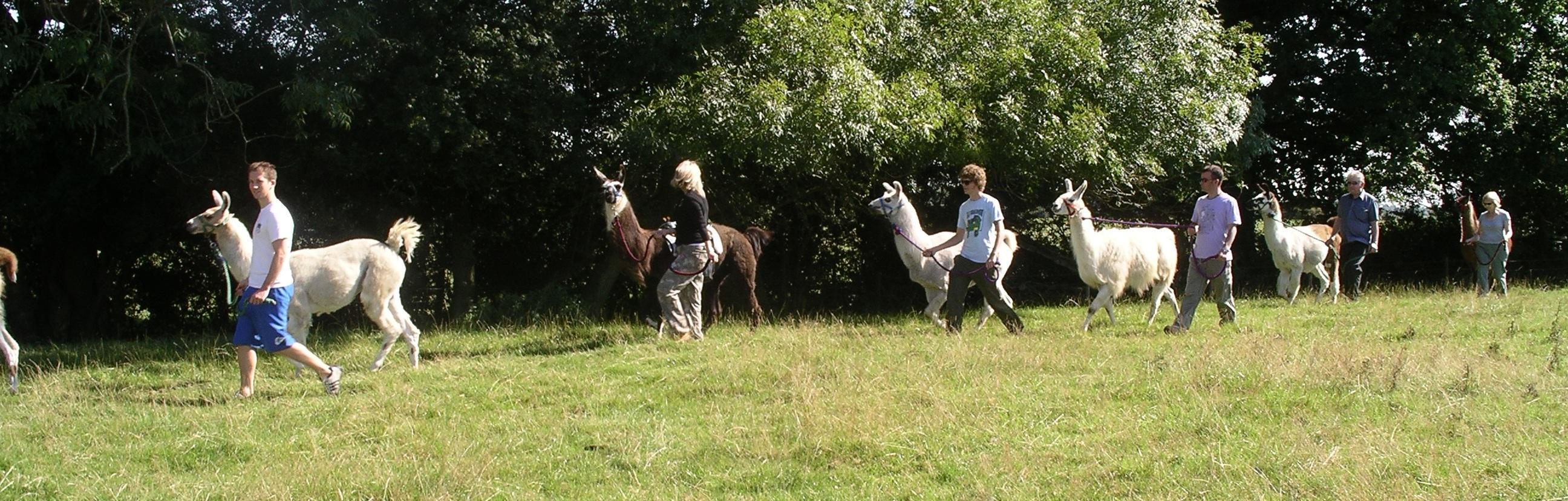 Llamas Trekking