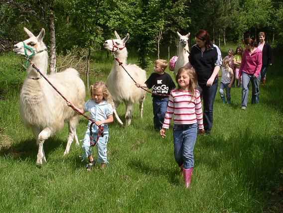 children llama party