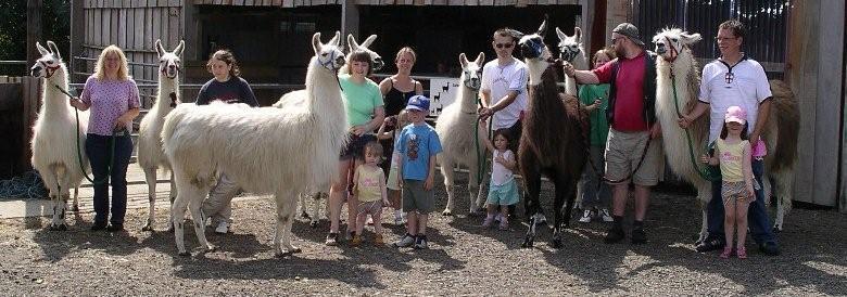 Llama party